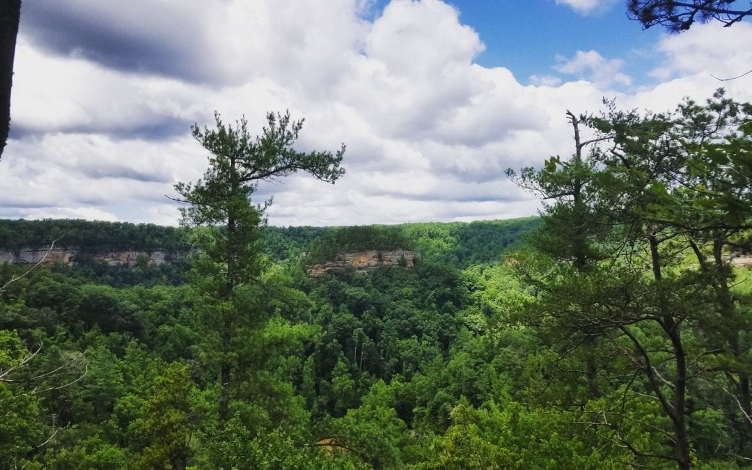 Are You Ready for Spring in Red River Gorge?